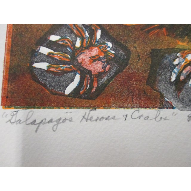 Vintage Lithography of Galapagos Herons and Crabs Signed by Artist: Ann Zahn For Sale - Image 4 of 5