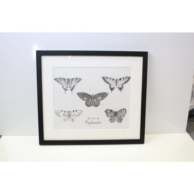 Extremely well done black and white sketch of five butterflies. So well done the sketch looks like a print until closer...