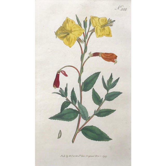 Late 18th Century Original Antique Curtis Floral Botanical Etchings C. 1796 - a Pair For Sale - Image 5 of 6