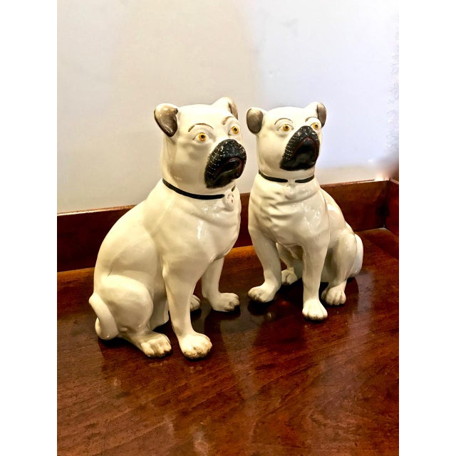 This is a superb pair of English Staffordshire male and female pugs. These large pugs have lots of character and are in...
