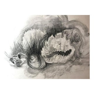 Vintage Charcoal Drawing of Sea Shells Preview