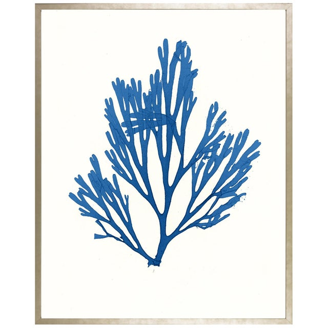 """Azure Seaweed #1"" Framed Print - Image 1 of 2"