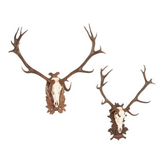 Antique Stag Antlers on Carved Black Forrest Mounts - a Pair For Sale