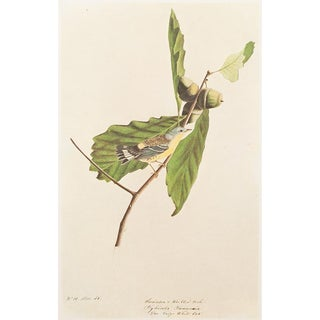 1966 Cottage Lithograph of Swainson's Warbler by John James Audubon