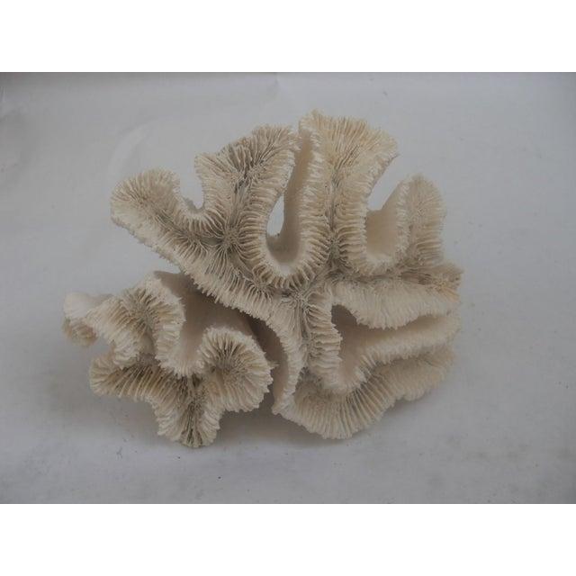 White Coral Specimen - Image 2 of 3