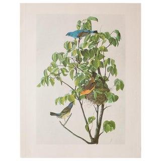 Blue Grosbeak by John James Audubon, 1966 Vintage Cottage Print For Sale