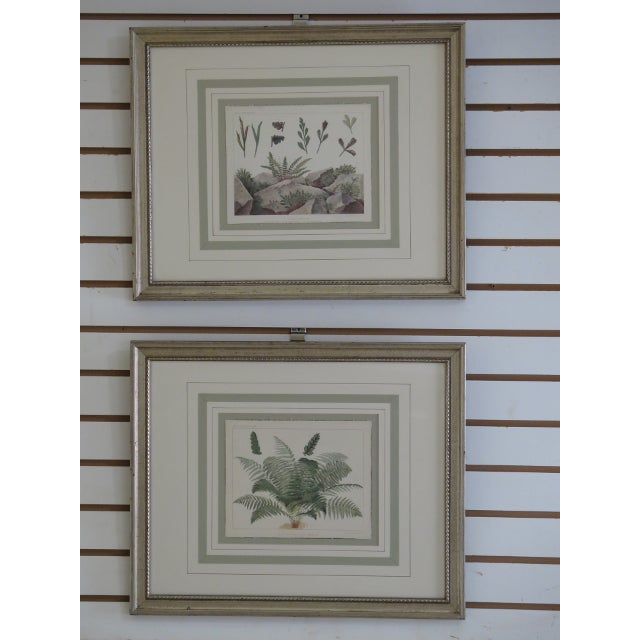Vincent Brooks Day & Sons Decorative Lithograph Fern Prints - a Pair For Sale - Image 13 of 13
