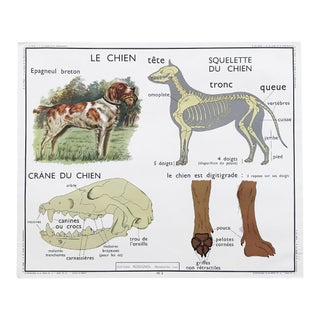 """Vintage French Educational Double-Sided """"Le Chien / Dog / Les Insectivores"""" School Poster Chart For Sale"""