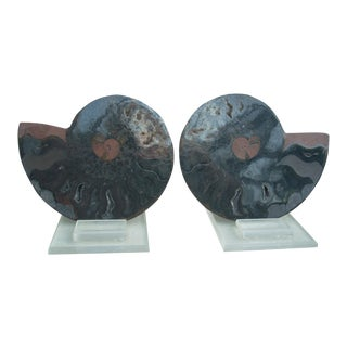 Natural Split Black Ammonite - A Pair For Sale