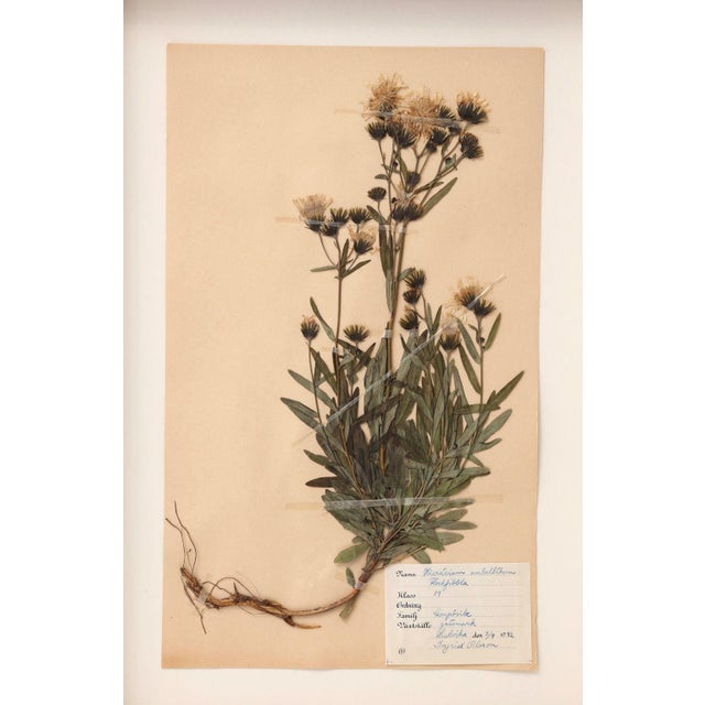 1930s Ten Vintage Swedish Herbaria For Sale - Image 5 of 13