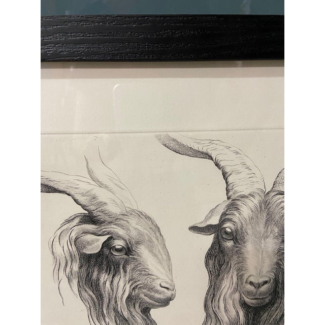 Figurative Man as Mountain Goat - Physiognomic Heads Series Framed Illustration by Charles Le Brun For Sale - Image 3 of 11