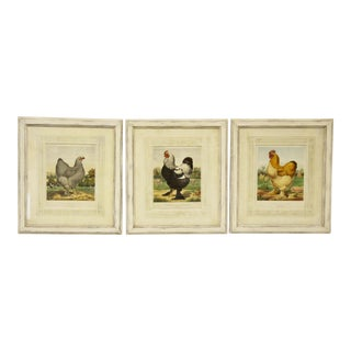 English Prize Winning Chickens Prints, S/3 For Sale