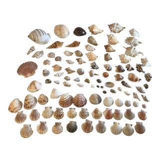 Natural Seashell Collection - Set of 97 For Sale