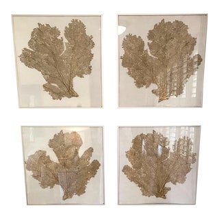 Framed Resin Sea Fans on Linen - Set of 4