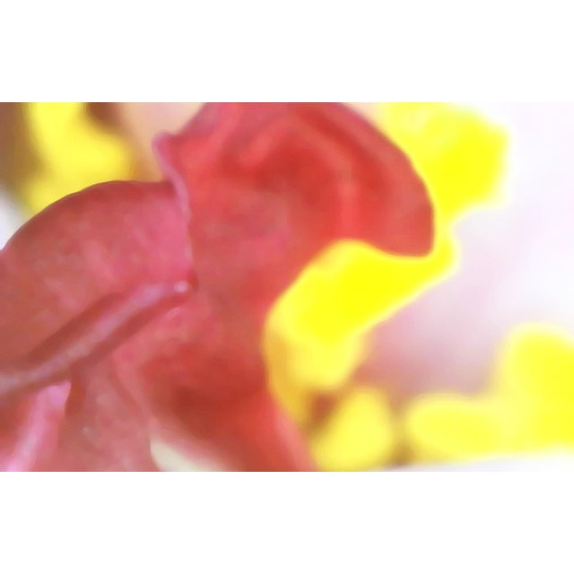 """Contemporary """"Petals 1"""" Photography Print For Sale - Image 3 of 3"""
