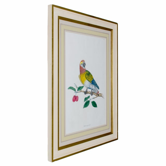 White 1796 English Traditional John Frederick Miller Parrot Engravings - Set of 4 For Sale - Image 8 of 12