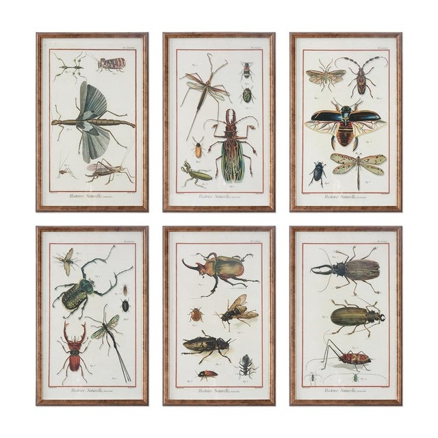 Six Framed Scientific Bugs & Insects Prints | Chairish