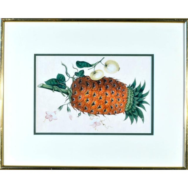 Chinese Fruit Watercolor Paintings on Pith Paper - Set of 8 For Sale - Image 4 of 10