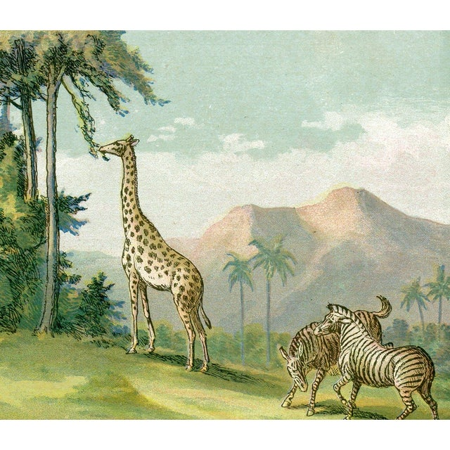 African Animals, 1886 Chromolithograph - Image 3 of 4