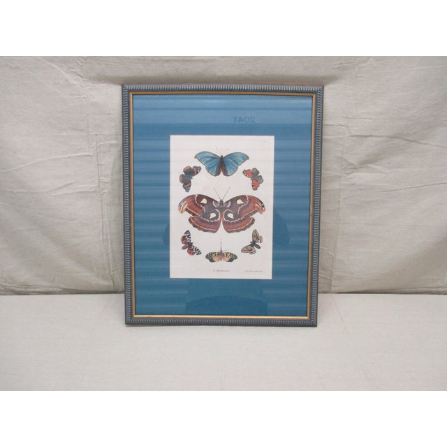 Vintage Print Framed in Wedgewood Blue Color Wood Frame With Glass Cover For Sale - Image 10 of 10