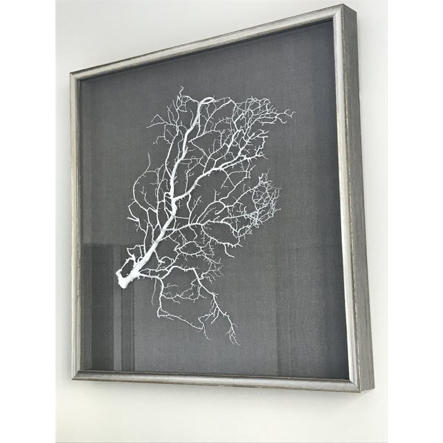 Contemporary Wjc Designs Framed Sea Fan Coral on Belgian Linen For Sale - Image 3 of 6