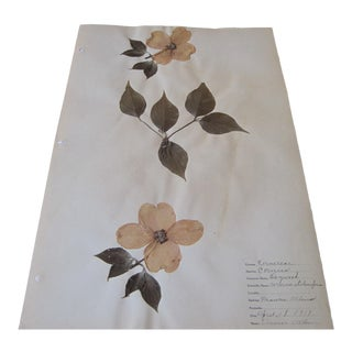 Flowers Pressed Artwork, 1917 For Sale