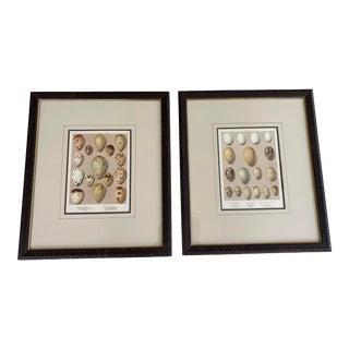 Birds Eggs 1908 Study Prints Framed - Pair For Sale
