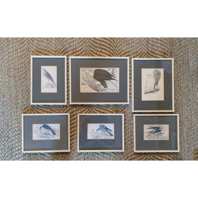 A set of 1840's hand painted engravings. Each piece depicts a different bird. These antique engravings are all...