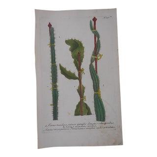 Circa 1740 Johann Weinmann Botanical Mezzotint For Sale