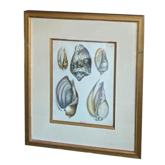 Traditional Antique Veluta Shell Engraving in Gilt Frame For Sale - Image 3 of 6