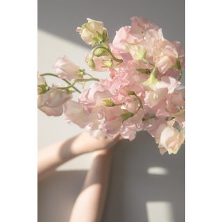 Blush: Sweet Peas I, 2020' Contemporary Photograph by Claiborne Swanson Frank, 11x14