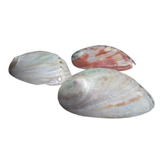 Natural Abalone Seashells- Set of 3 For Sale