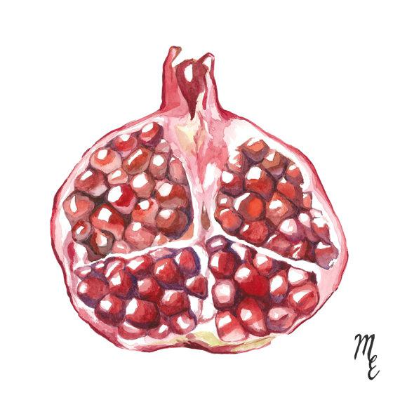 This watercolor of a pomegranate, originally painted by Mary Elizabeth, is reproduced by high-quality printmaking...