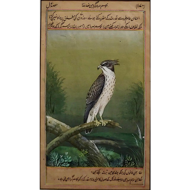 18th Century Antique Middle Eastern or Persian Falcon Painting W/Calligraphy For Sale - Image 4 of 8