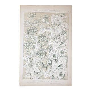 Honeysuckle and Convolvous From Owen Jones Grammar of Ornament For Sale