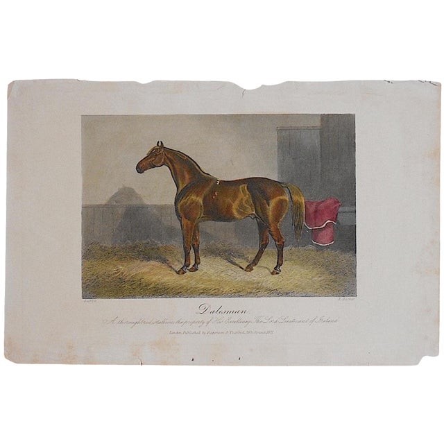 Antique Horse/Equine Engraving - Image 1 of 3