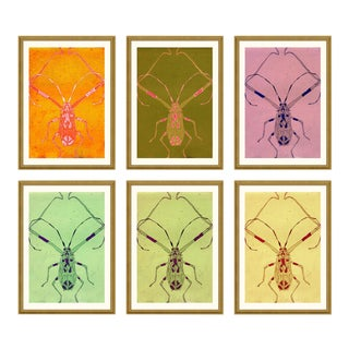 Long Legged Bug Set of 6 by Jessica Molnar in Gold Frame, Small Art Print For Sale