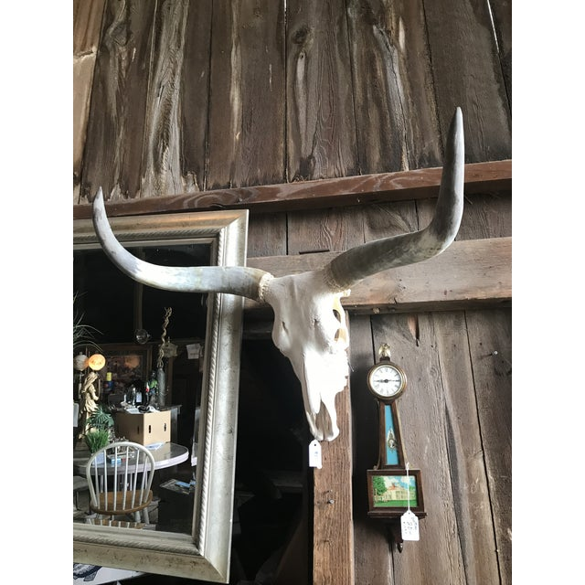 Beautifully preserved long horn. In very good condition and easily shippable. Great piece. Stunning accent over fireplace...