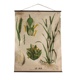 Vintage French Botanical Print