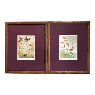 Late 19th Century Antique French Chromolithographic Butterfly Prints - A Pair For Sale