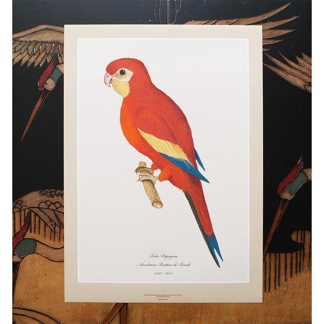 XL 1590s Contemporary Prints of Anselmus Boëtius De Boodt Parrots - Set of 6 For Sale In Dallas - Image 6 of 9