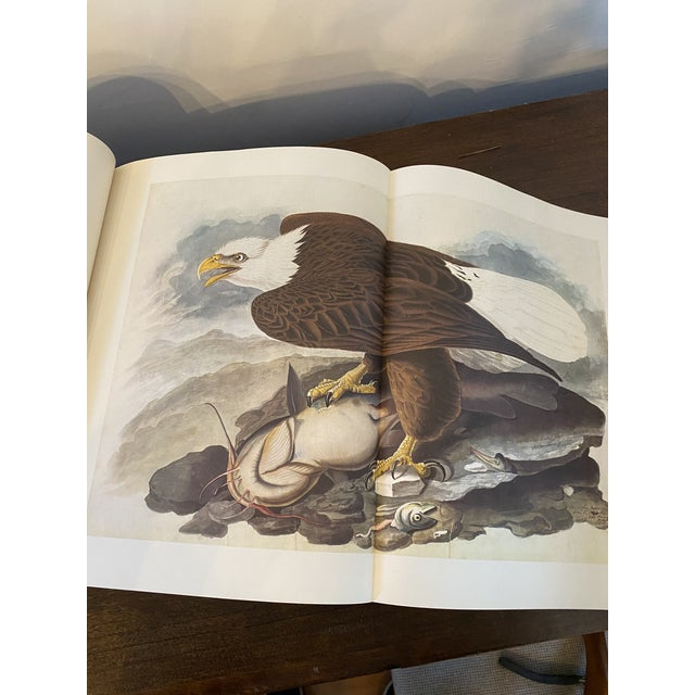 1960s The Original Watercolor Paintings by John James Audubon for the Birds of America - 2 Pieces For Sale - Image 9 of 10