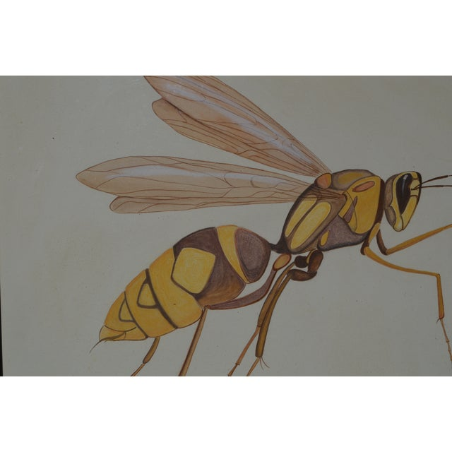 Black Insect Ant Pencil Paper Framed Art Still Life Painting Drawing Signed Payne For Sale - Image 8 of 12