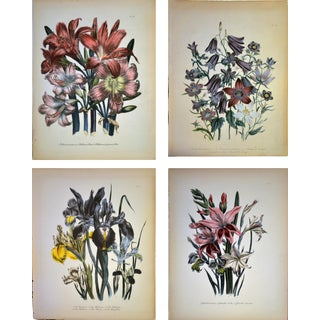 19th Century Jane Loudon Botanical Prints - Set of 4 For Sale