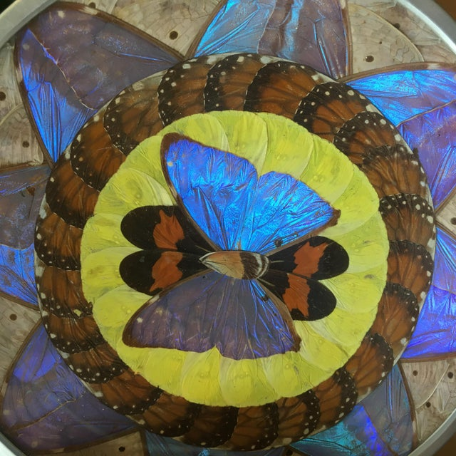 Mid-Century Modern Vintage Butterfly Wing Art For Sale - Image 3 of 5
