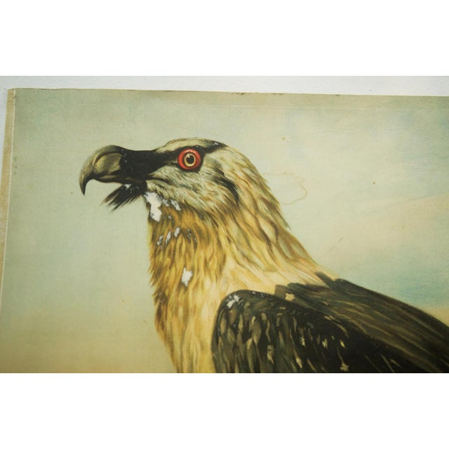 German vintage eagle school poster For Sale - Image 4 of 7