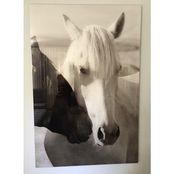 Edelman Sermo Per Equus Lindisimo Photograph - Image 3 of 4