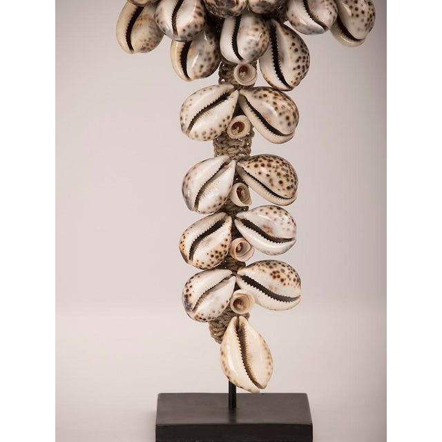 Vintage Grand Scale Cowrie Shell Necklace circa 1980, Africa, Mounted on Custom Stand For Sale - Image 9 of 9