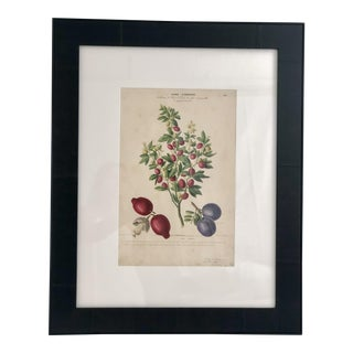 1843 Hand-Colored French Botanical For Sale