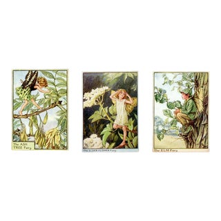 Vintage Flower Fairies of the Trees, Set of 3 Prints For Sale